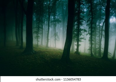 dark woods with fog and green trees