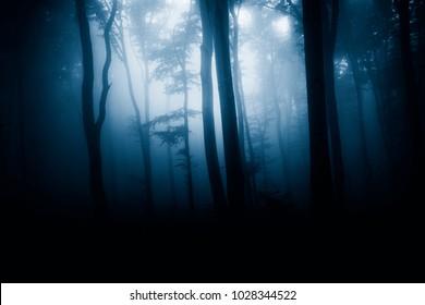 dark woods at night, fantasy background