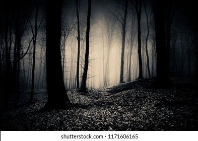 dark woods at night, gothic landscape