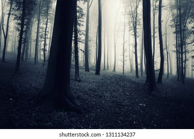 dark woods scene, trees in fog and mysterious path leading to wonderland