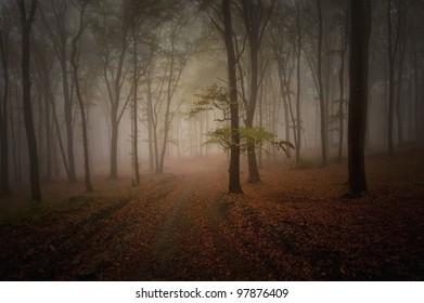 dark woods in summer