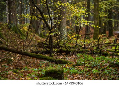 Darker autumnal mixed forest with colorful colors