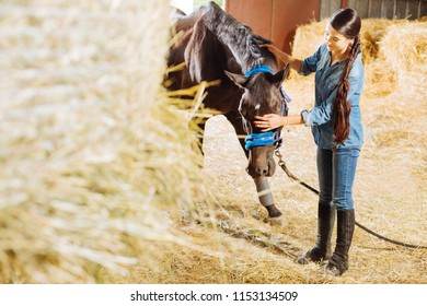 Dark-haired horsewoman. Dark-haired beautiful horsewoman feeling extremely happy while feeding dark horse with straw