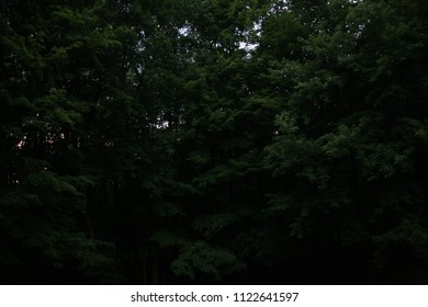 dARKNESS oF tHE eERIE tREES