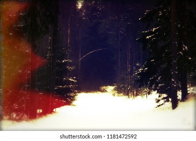 darkness and the empty dusk of the cold winter forest. winter in the forest with the spirits