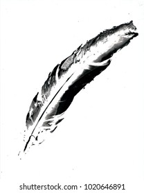 Darkroom photography.  Photogram of a white feather onto silver photographic paper. Darkroom process.