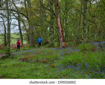 Darroch Woods, Scotland - 8th May 2019: A Young Man and Woman running on a path through Darroch Woods, surrounded by Wild Bluebells.