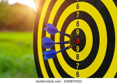 """Dartboard on darts sport outdoor with green filed and sunlight background with arrows hitting the center target  also known as """"bulls eye"""".Aim and reach concept."""