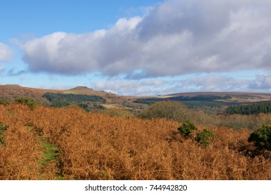 Dartmoor Autumn Colours