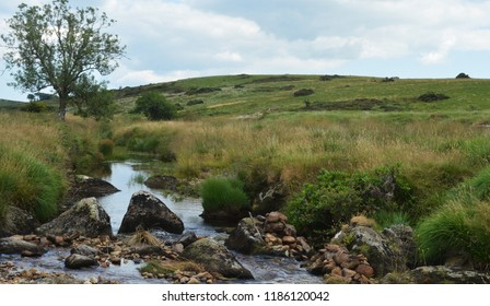 dartmoor devon stream