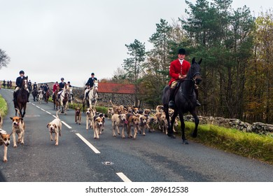Dartmoor, England - 28 October 2014 - Traditional fox hunting with dogs in Dartmoor, England