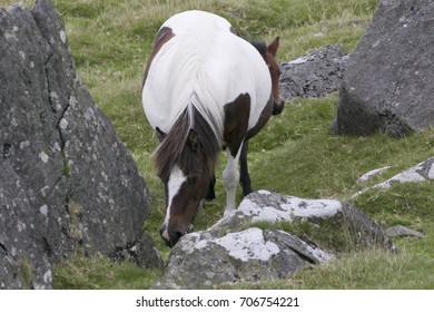 Dartmoor mare with foal in National Park
