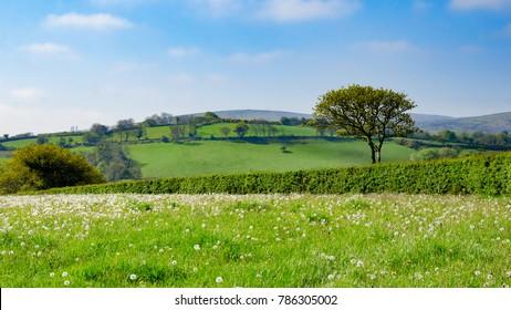 Dartmoor National Park, Area of Moorland In Southern Devon, England, In Spring Season