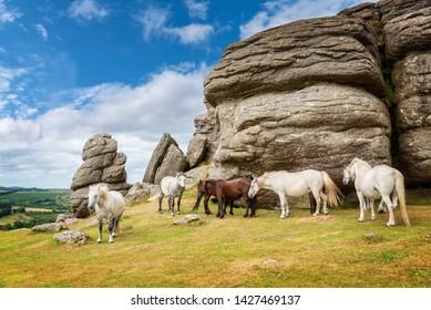 Dartmoor Ponies near Saddle Tor, Dartmoor, Devon, UK