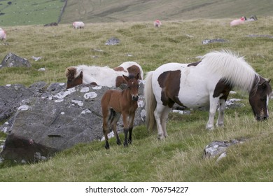 Dartmoor Pony with foal in National Park