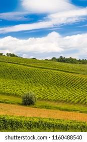 Daruvar vineyard landscape, idyllic green hills, Croatia