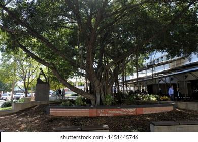 DARWIN, NT - JULY 10 2019: 2019:The Banyan Tree, Raintree Park an historical tree and a very popular tourist attraction in Darwin CBD Northern Territory, Australia.