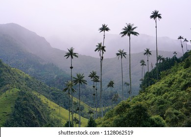Das kleine Dorf Salento, das sich ungefähr auf halber Strecke zwischen Cali und Medellín befindet, ist vor allem für seine Lage berühmt. Die Grössten Palmen der Welt wachsen hier.