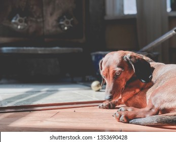 Daschund laying by the wood stove