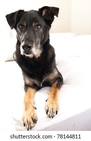 Dashing Old Dog Looks Very Royal