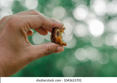 Date palm in hand and blur background