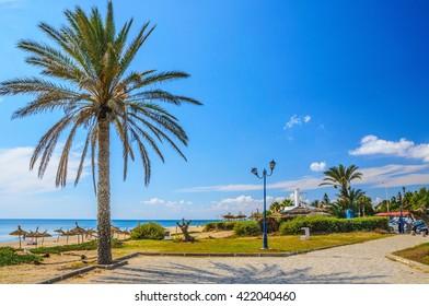 Date palm on the beach in Hammamet Tunisia.