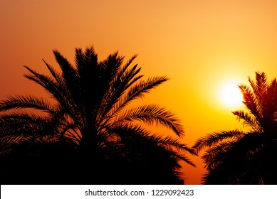 Date palm tree silhouette at beautiful sunset in Dubai, UAE. Palms, orange sky and sun on persian gulf beach. Middle east hoiday travel background design.