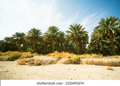 North African Oasis Images Stock Photos Vectors Shutterstock