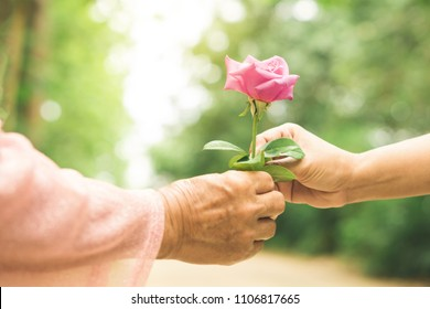 daughter hand giving rose flower to mother with love