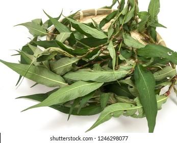 'Daun Kesum' or Vietnamese coriander on white background.
