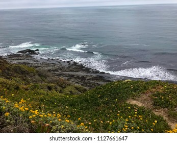 Davenport Pier, Northern California. The view from the cliffs above Four Mile Beach near Davenport California. Yellow flowers on a hill.