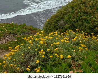 Davenport Pier, Northern California. The view from the cliffs above Four Mile Beach near Davenport California. Yellow wildflowers on a hill.