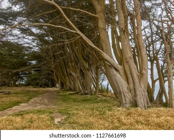 Davenport Pier, Northern California. The view from the cliffs above Four Mile Beach near Davenport California. Tall trees near the walking path.