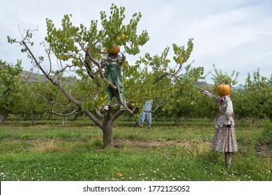 Davison Orchards in Vernon BC in Canada