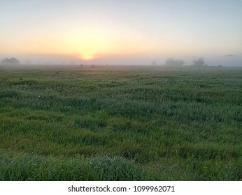 A dawn early in the morning in the steppe with fog.