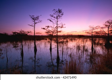 dawn in florida everglades with cypress trees reflected in swamp waters
