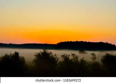 dawn and foggy morning in Belovezhskaya Pushcha. Byelorussia