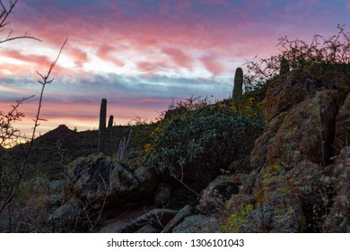 Dawn, just before sunrise in Saguaro National Park west of Tucson. Pink, blue, red and purple colors in the sky. Sonoran Desert landscape, rocks, mountains, yellow wildflowers and cactus. Arizona.