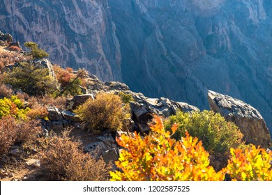 Dawn light hits the rocks and plants on the edge of Black Canyon of the Gunnison National Park in Colorado