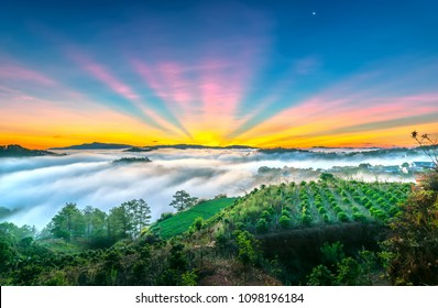 Dawn on the plateau in the morning with colorful sky, beneath the pine forests covered with fog shrouded the landscape so beautiful idyllic countryside Dalat plateau, Vietnam