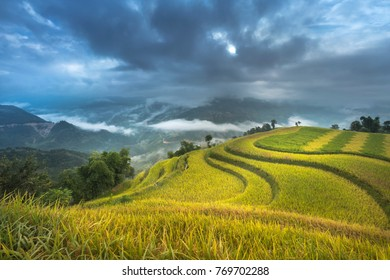 Dawn on rice fields prepares the harvest at northwest Vietnam. Rice fields terraced of Hoang Su Phi, Ha Giang province, Vietnam. Vietnam landscapes