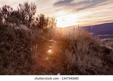 Dawn over the shrubbery in Vernon BC
