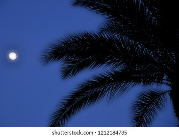 Dawn of palm trees Phoenix Scottsdale Arizona United States