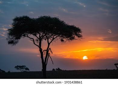 The dawn sunrise in the savannah of  Serengeti national park in Tanzania, Africa