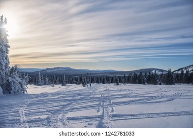 Dawn in the winter in the forest, snowy Christmas trees at dawn, the Ural mountains