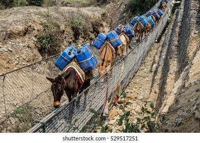 Day 1 of EBC Trek:  Horses crossing a suspension bridge