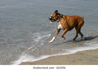 Day at the Dog Beach