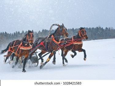 The day of the Horse in the village Yerofeyka the Vologda region of the Russian competition of triples.