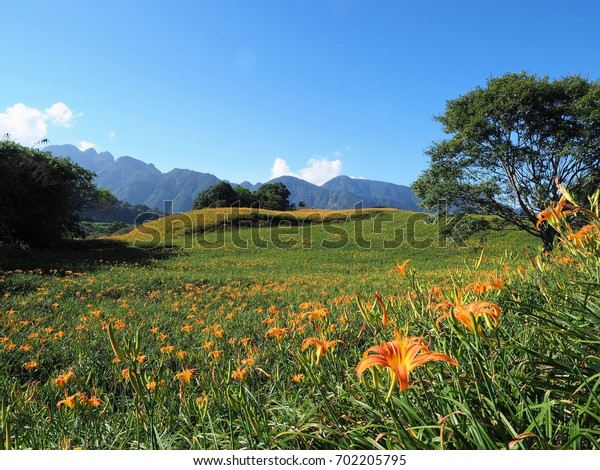 the day lily garden at Lioushihdan mountain, east rift valley of Taiwan