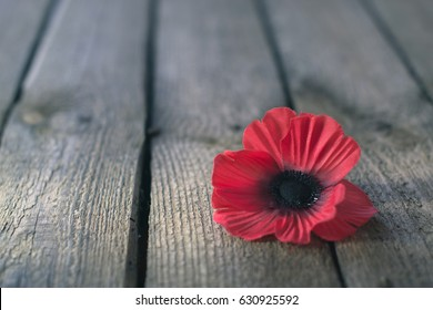 Day of memory red poppy symbol concept